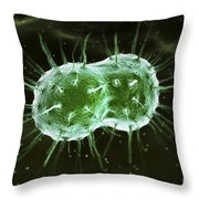 Neisseria Gonorrhoeae Bacteria Throw Pillow