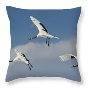 Red-crowned Cranes Throw Pillow