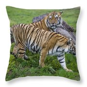 Siberian Tigers, China Throw Pillow