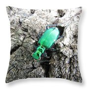 6 Spotted Tiger Beetle Throw Pillow