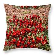 Sturt's Desert Pea Outback South Australia Throw Pillow