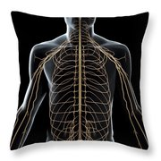 The Nerves Of The Upper Body Throw Pillow