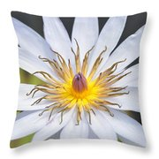 Water Lily  6 Throw Pillow