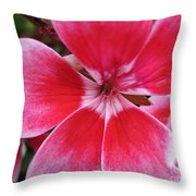 Zonal Geranium Named Candy Fantasy Kiss Throw Pillow