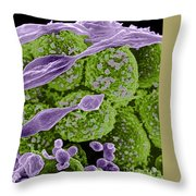 Methicillin-resistant Staphylococcus Throw Pillow by Science Source