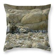 Arabian Leopard Panthera Pardus Throw Pillow