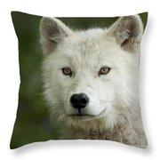Arctic Wolf Pup Throw Pillow