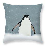 Chinstrap Penguin  Pygoscelis Throw Pillow