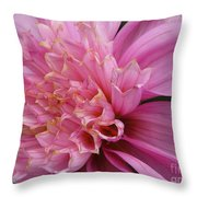 Dahlia Named Siemen Doorenbosch Throw Pillow