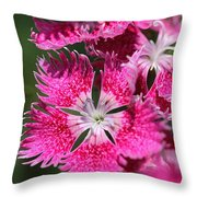 Dianthus Cross Throw Pillow