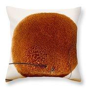 Fertilization Throw Pillow