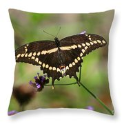 Giant Swallowtail Butterfly Throw Pillow