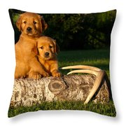 Golden Retriever Puppies Throw Pillow