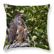 Juvenile Bald Eagle Throw Pillow