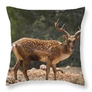 Mesopotamian Fallow Deer  Throw Pillow