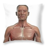 Muscles Of The Upper Body Throw Pillow
