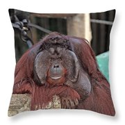 Portrait Of A Large Male Orangutan Throw Pillow