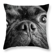 Portrait Of Pug Bulldog Mix Dog Throw Pillow