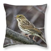 Savannah Sparrow Throw Pillow