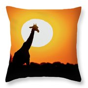 Southern Giraffe Giraffa Camelopardalis Throw Pillow