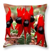 Sturt's Desert Pea Outback South Australia Throw Pillow