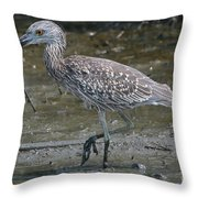 Yellow -crowned Night Heron Throw Pillow
