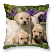 Yellow Labrador Puppies Throw Pillow