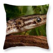 Colombian Rainbow Boa Epicrates Maurus Throw Pillow