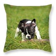 French Bulldoggs Throw Pillow