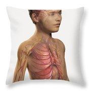 Internal Anatomy Pre-adolescent Throw Pillow
