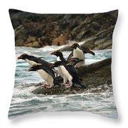 Macaroni Penguin Throw Pillow