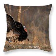 Male Eastern Wild Turkey Throw Pillow
