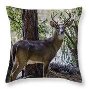 8 Point Buck In My Backyard Throw Pillow