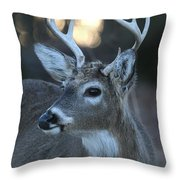 8 Point Buck With Sunset Throw Pillow