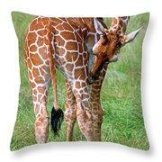 Reticulated Giraffe Throw Pillow