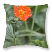 Scarlet Avens Orange Wild Flower Throw Pillow
