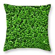 Spiroplasma Bacteria, Sem Throw Pillow