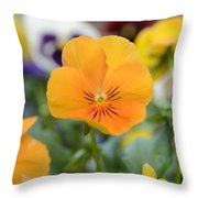 Viola Tricolor Heartsease Throw Pillow