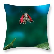 89 Butterfly In Flight Throw Pillow by Stephen Dalton