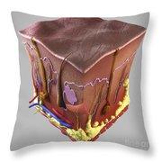 Anatomy Of Human Skin Throw Pillow