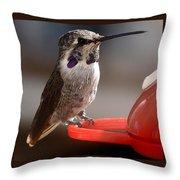 Female Anna's Sitting On Perch Throw Pillow