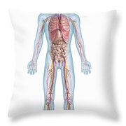 Internal Anatomy Pre-adolescent Throw Pillow