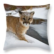 Mountain Lions In The Western Mountains Throw Pillow