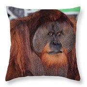 Portrait Of A Large Male Orangutan Throw Pillow