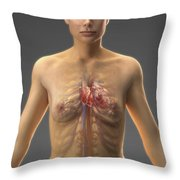 The Cardiovascular System Female Throw Pillow