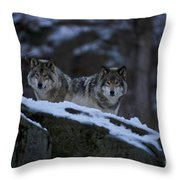 Timber Wolf Pictures Throw Pillow by Wolves Only