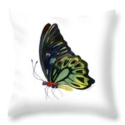 97 Perched Kuranda Butterfly Throw Pillow by Amy Kirkpatrick