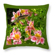 A Annas Humming Bird Throw Pillow