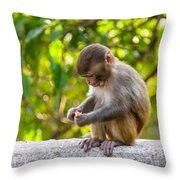 A Baby Macaque Eating An Orange Throw Pillow