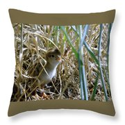 A Baby Quail Looks Back Throw Pillow
